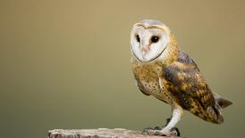Owl-Spirit
