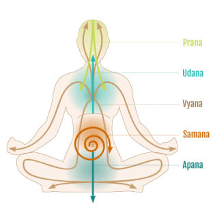 prana-flow-image