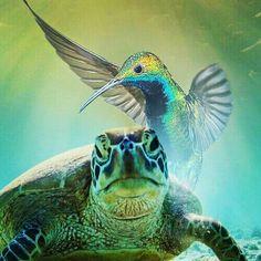 turtle-vs-hummingbird