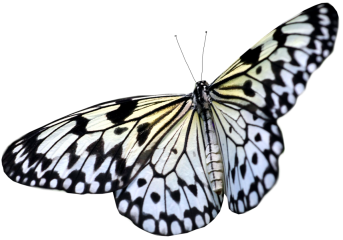 black-white-butterfly-png-17