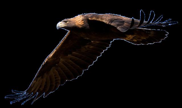 clipart-bird-buzzard-1